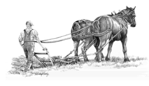 Plow-horse